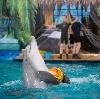 Дельфинарии, океанариумы в Анжеро-Судженске